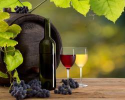 Weinfest im Meißner Land