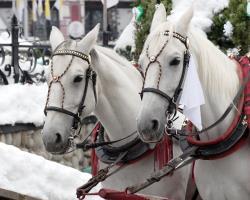 23.02.2017 Mit dem Pferdeschlitten durch den Winterwald